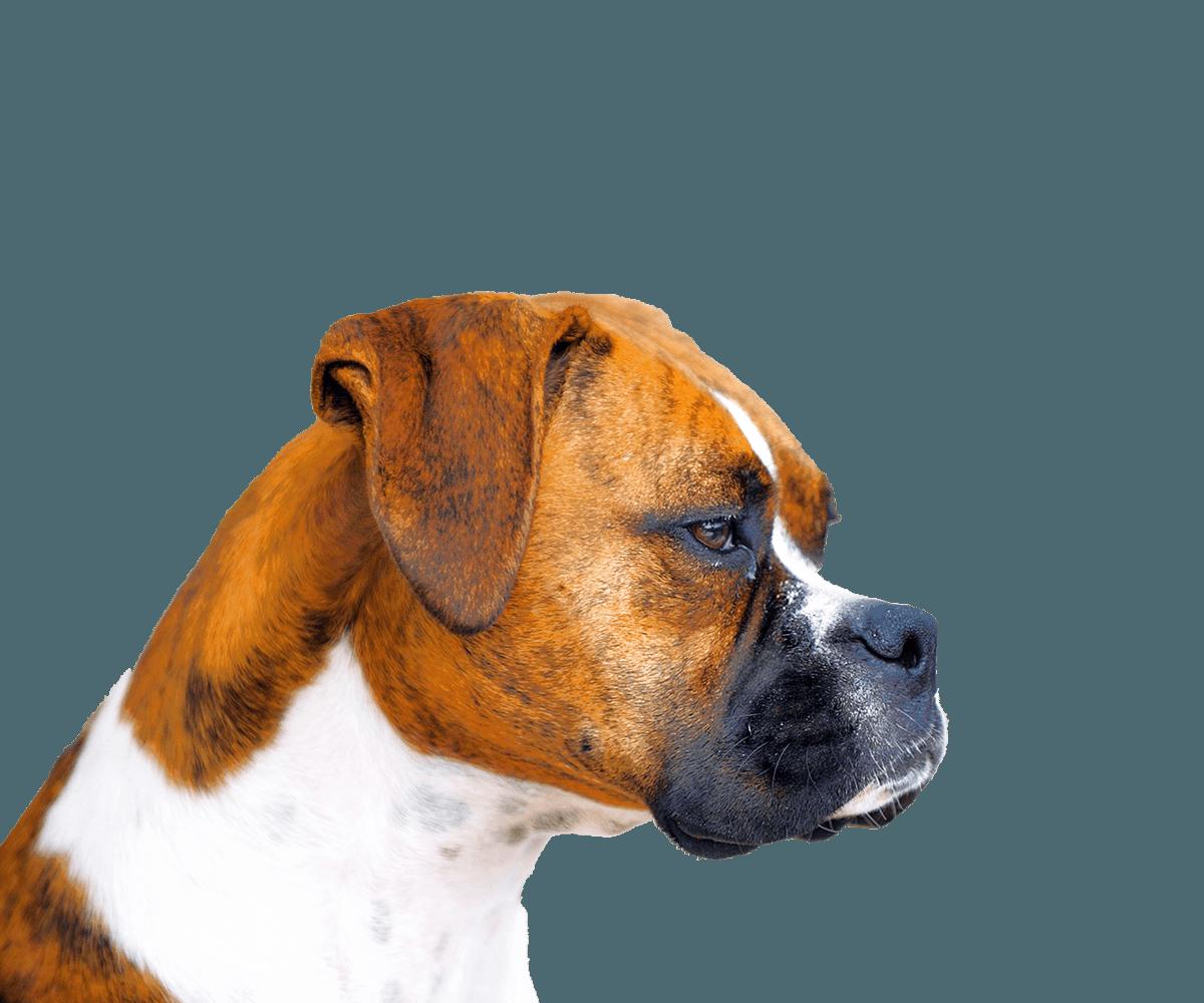 Affordable Animal Emergency Clinic l 24 HR Emergency